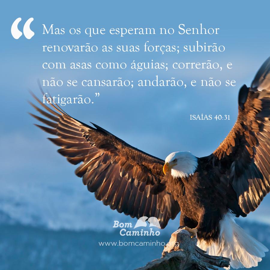 Muito 16 Versículos sobre Conforto e Consolo | BomCaminho.org LU99